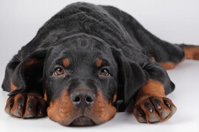700-dog-pet-animal-cute